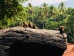 View the album Sri Lanka 2017